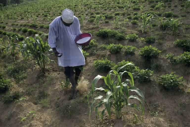 Nigerian govt flags-off distribution of Agric inputs to 7,386 Borno farmers