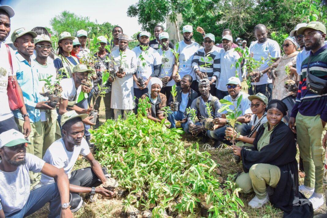 Panacea Foundation, a Non-Governmental Organization, NGO, has launched planting of 5,000 tree seedlings in Bayero University, Kano, BUK.