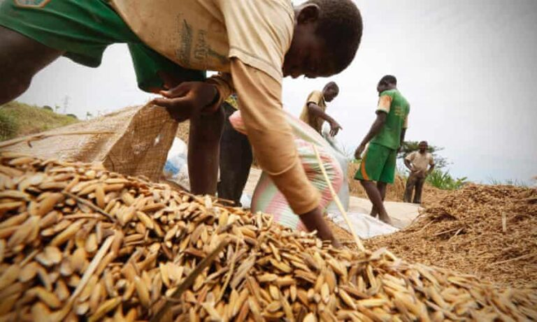 Farmers urged to embrace improved post-harvest storage technologies
