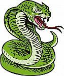 cobra-viper-snake-100217278