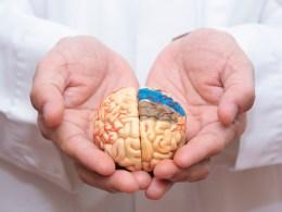 A New Technique Retrains Cells To Rebuild Damaged Brain Tissue