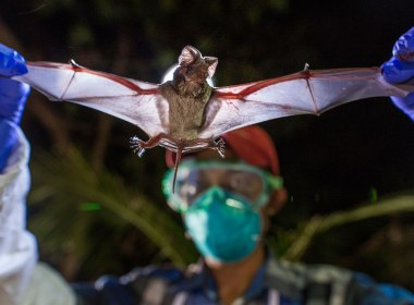New Virus Similar To Corona Virus Detected In China