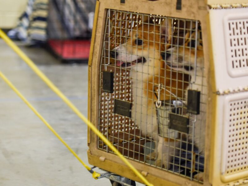 The US Bans The Dogs For 1 Year To Prevent Rabies