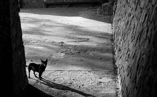 خالی گھر کے واش روم میں بندھا کتا 2ماہ بعد برآمد لیکن دراصل اتنے دن کیسے زندہ رہا؟ سن کر انسان حیران رہ جائے