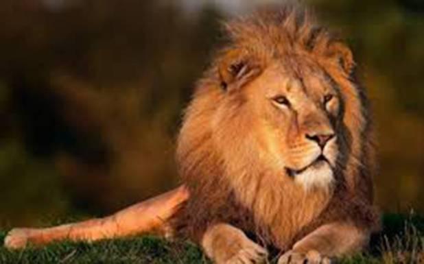 بھارت میں چڑیا گھر کے 5 شیروں میں بھی کورونا وائرس کی تصدیق، انتہائی حیران کن انکشاف
