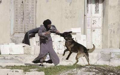 کراچی میں لیڈی ڈاکٹر پر کتے کا حملہ لیکن پھر مقدمہ کس کیخلاف درج کرلیا گیا؟ بڑی خبرآگئی