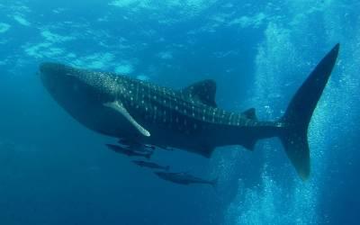 ساحل سمندر پر حاملہ وہیل مچھلی کی لاش، اس کا پیٹ چیر کر دیکھا تو ماہرین بھی بے حد دکھی ہوگئے