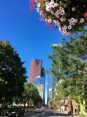 toronto-downtown-2