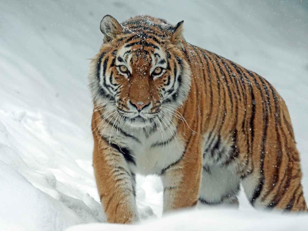 angry animal big carnivore