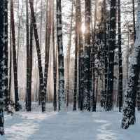 Snowfall of purity