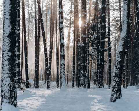 woods covered with snow