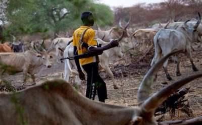 Image result for Fulani hensman