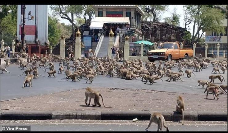 Coronavirus: Community of monkeys invade Thai city in search of food (Photos)