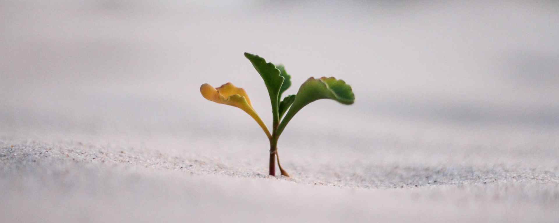 What is Your Measure of Spiritual Growth