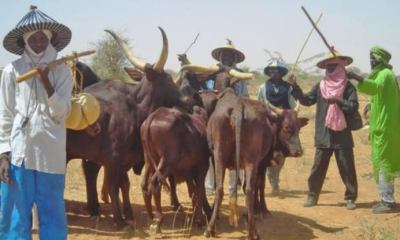 Anti-Open Grazing Bill: Miyetti Allah Demands 750,000 Hectares of Land for Ranching in Delta   Daily Report Nigeria