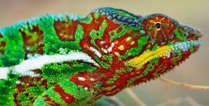 Les couleurs des caméléons, et leurs modifications, résultent de phénomènes physiques, basés sur des cristaux photoniques.