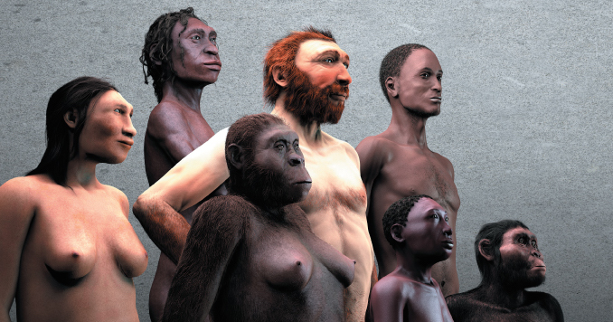 """Nouvelle """"Galerie de l'Homme"""", au Muséum des Sciences Naturelles de Bruxelles."""