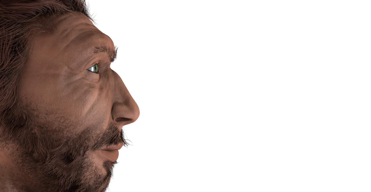Homme de Neandertal, reconstitution. © IRSNB