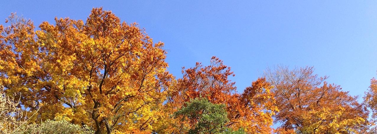 L'évapotranspiration des arbres et des sols modifient la gravité locale. L'Observatoire royal de Belgique vient de le mesurer.