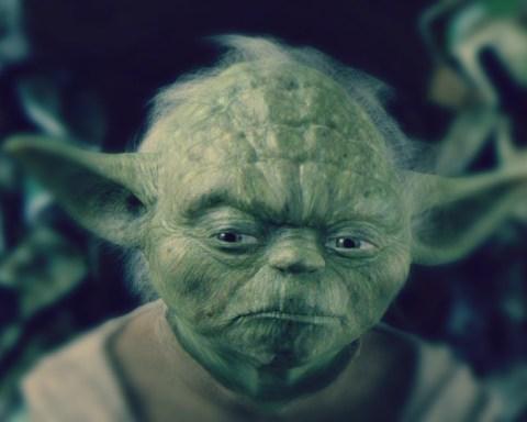 Dans la saga Star Wars, Maître Yoda, 900 ans au compteur, affiche lui aussi des oreilles hyper développées... © StarWars/Lucas film