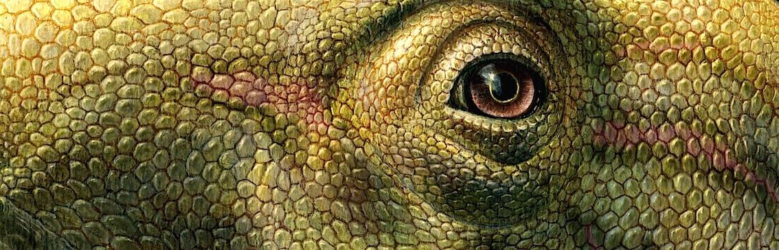 Matheronodon provincialis. Extrait du dessin de Lukas Panzarin.