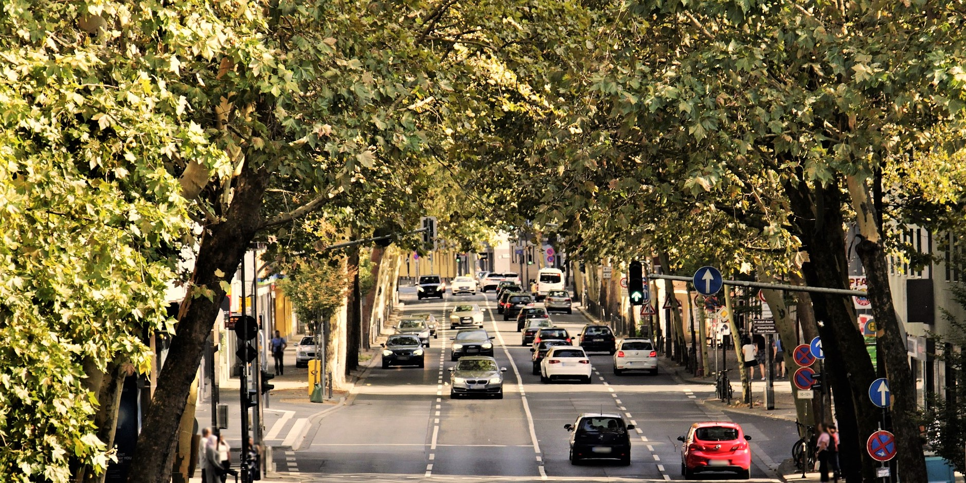 arbres en ville