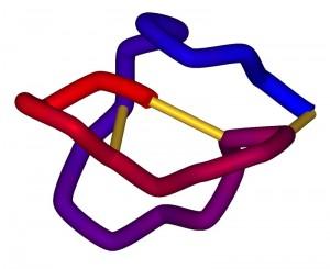 Représentation schématique du ziconotide. © Creative Commons
