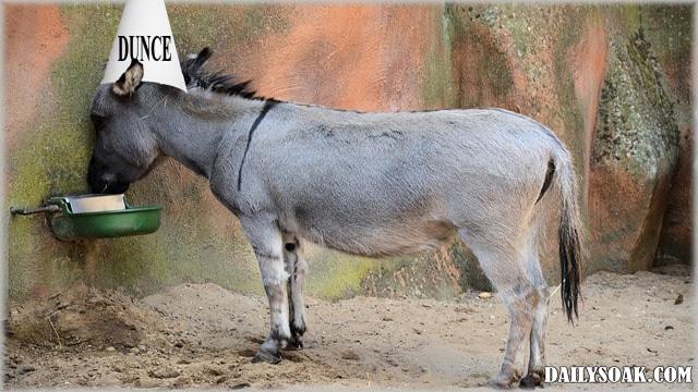 Jack ass versus mule