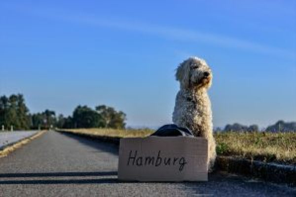 4 Essential Tips for Travelling with Dogs -Be informed