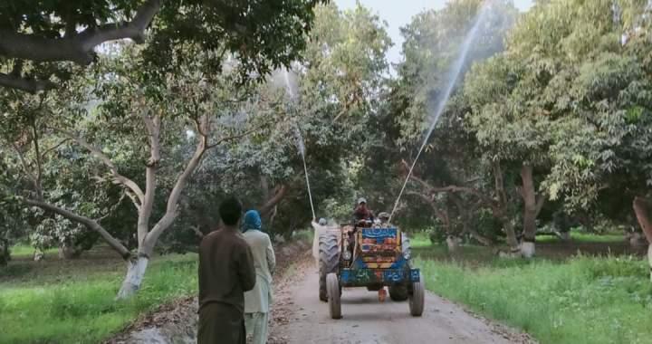 ضلع بھر میں ٹڈی دل(لوکسٹ) کی مقامی افزائش نہیں ہوئی۔ ڈپٹی کمشنر علی شہزاد
