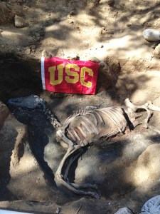 Neigh no more · The burial of prize racehorse Native Diver was excavated by a team of USC students at the Hollywood Park racetrack. - Photo courtesy of Thomas Garrison