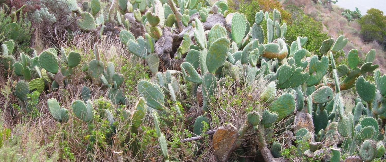 Photo courtesy of wikimedia.org