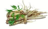ingredient-ginseng-root