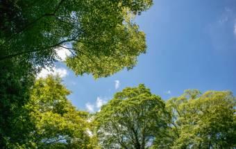 Los Árboles Son Un Oasis De Bienestar Mental