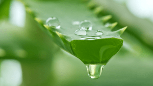 dripping-aloe-sized-for-new-rotator