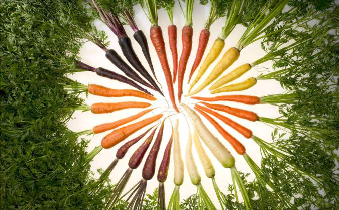 Carrot Colours
