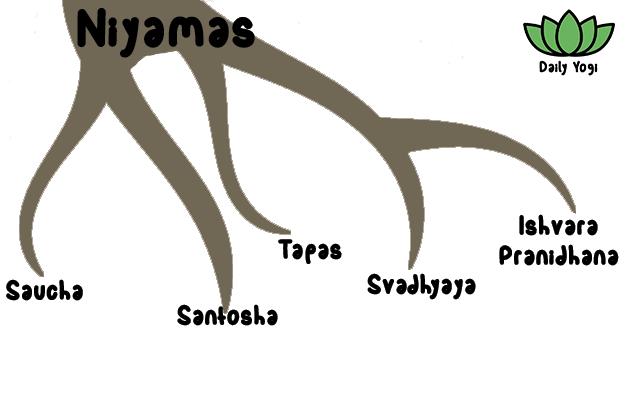 Daily Yogi branch of Niyamas lower limb of yoga - Saucha, Santosha, Tapas, Svadhyaya, Ishvara Pranidhana