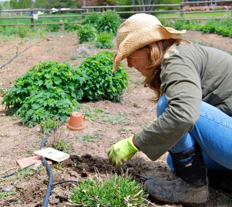 Rosemary Graff, Colorado, opens her farm to families in her community so their children can connect to the seasons and learn where their food comes from.