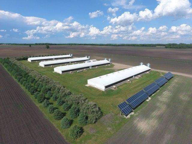 Hog barns on Rieke Farms.