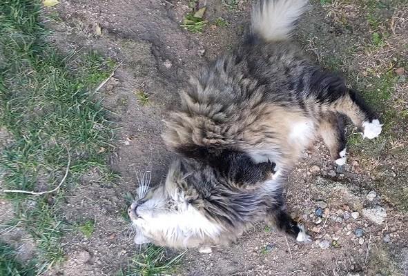 VISITING CATS