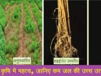 हाइड्रोजेल का कृषि में महत्व