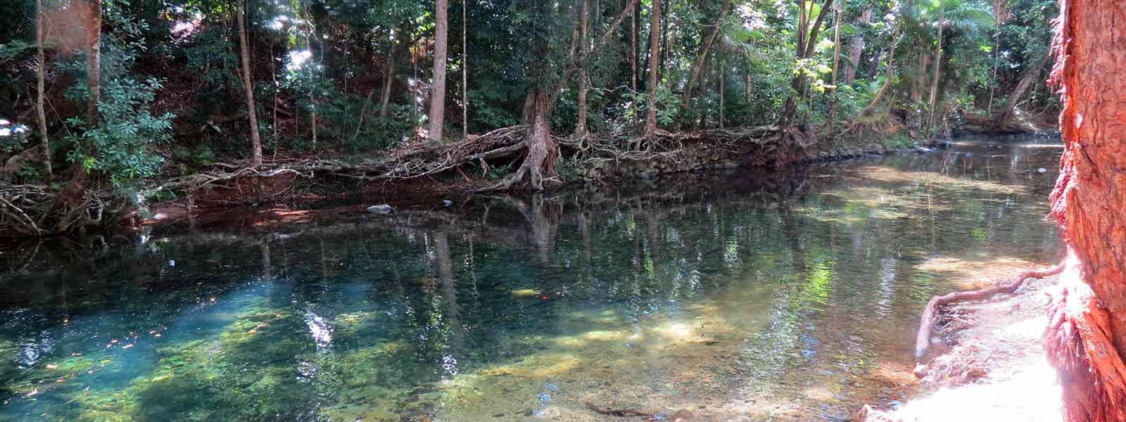 daintree-safaris-emmagen-creek