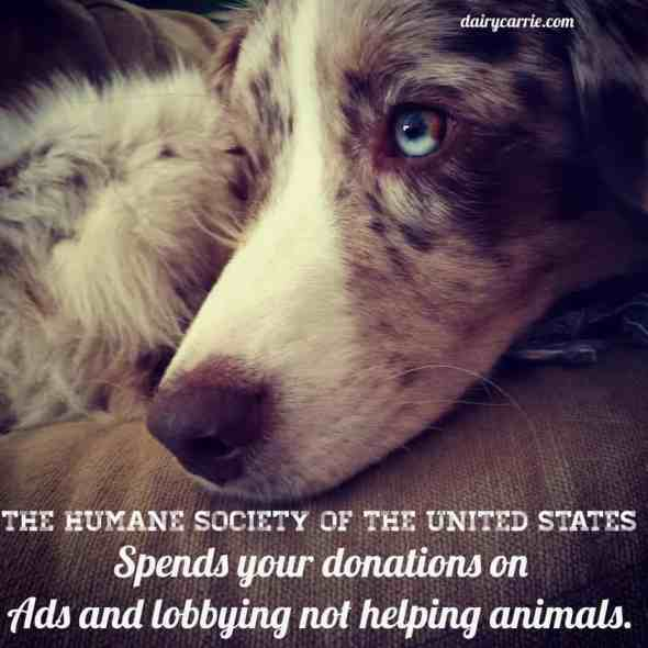 Donations to HSUS