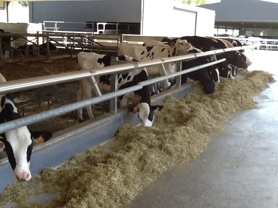 Comfy dry cows