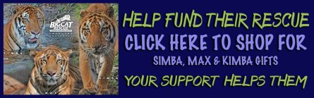 Support the cats of Big Cat Rescue