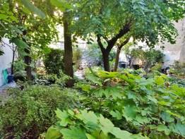 Albert's Garden Lush Foliage