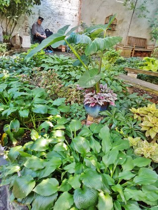 Albert's Garden with Area Resident