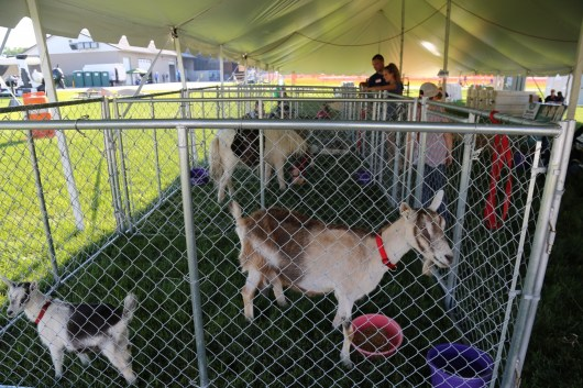 Cuddle with critters in the Petting Zoo at Breakfast on the Farm!