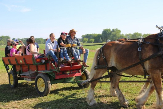 A beautiful day for a wagon ride!