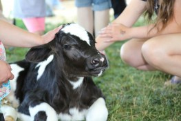 Hands-on Learning with a cuddly cute calf in the Kids Tent at the 2016 Breakfast! What an adorable baby #LoveBOTF